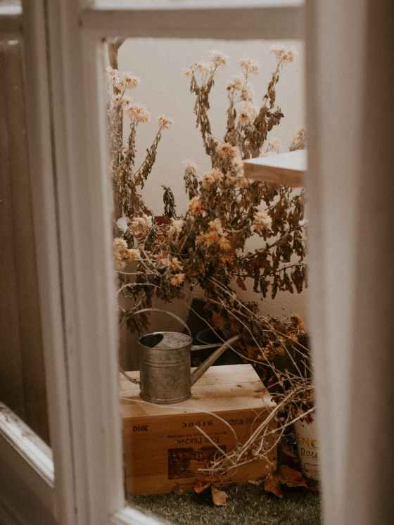dried flowers and watering can outside